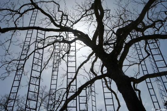 Ladders Tree Art + Graphics