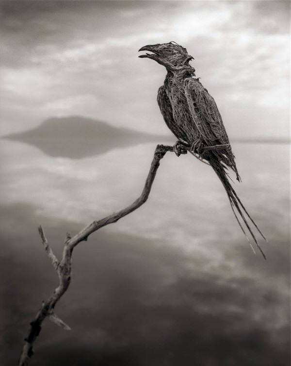 Deadly African Lake Turns Birds Into Salt Statues Art + Graphics Photography