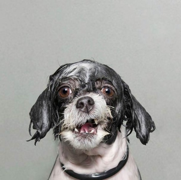 Wet Dog – Portraits of Wet Dogs by Sophie Gamand Animals + Nature Photography