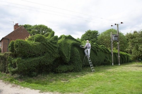 Retired Man Sculpts Giant Hedge Into a 100-foot-long Dragon Animals + Nature