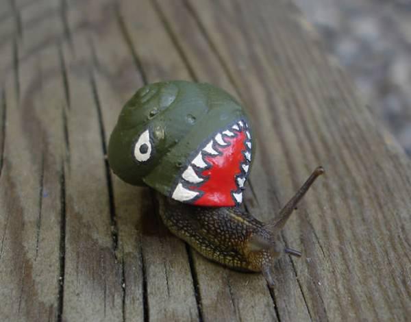 Save The Snails, Pimp Their Shells! Animals + Nature