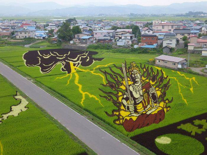 Land Art : Amazing Patterns in Rice Fields Animals + Nature
