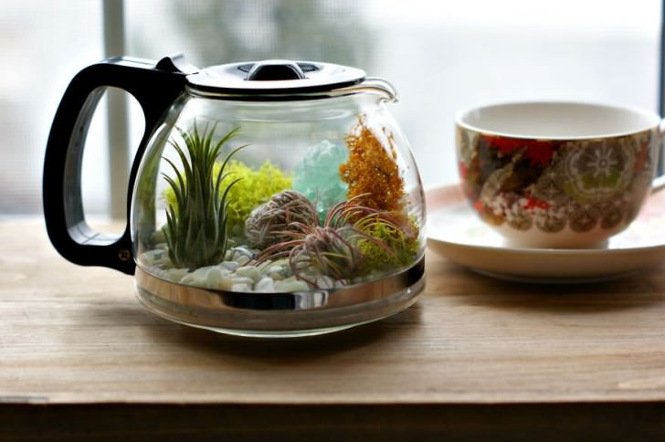 Diy: Coffee Pot Terrarium Animals + Nature DIY + Crafts