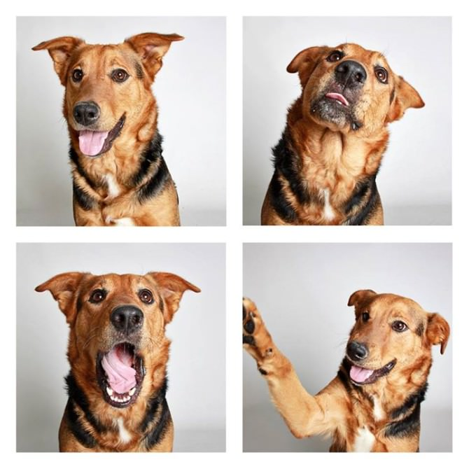 The Dogs Photo Booth by Guinnevere Shuster Animals + Nature Photography