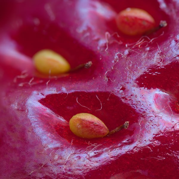 Extreme Close-up Of The Surface of a Strawberry By Alexey Kljatov Photography