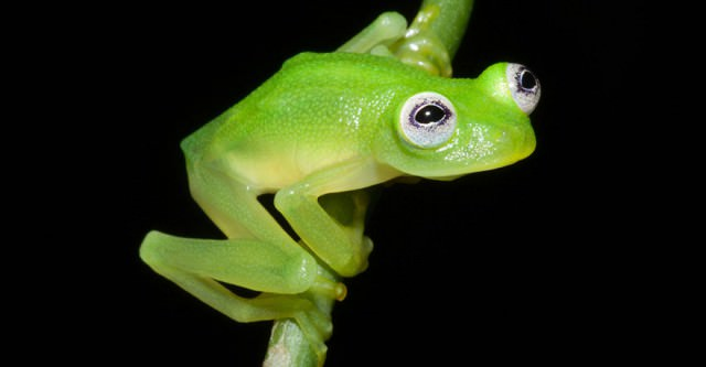 We Found The Real-life Kermit The Frog In Costa Rica Animals + Nature