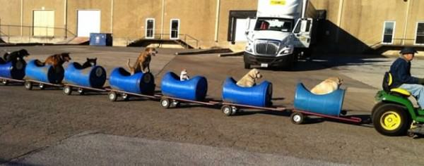 'dog Train' To Rescue Abandoned Dogs Animals + Nature