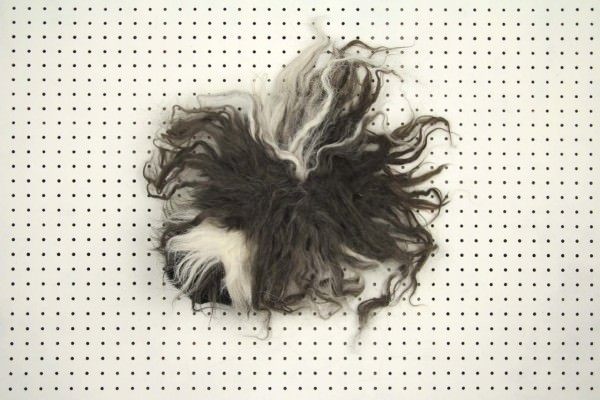 Pig or Wig? Animals + Nature Photography