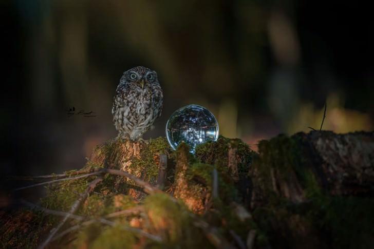 Cute Photo Of A Tiny Owl Hiding From The Rain Photography