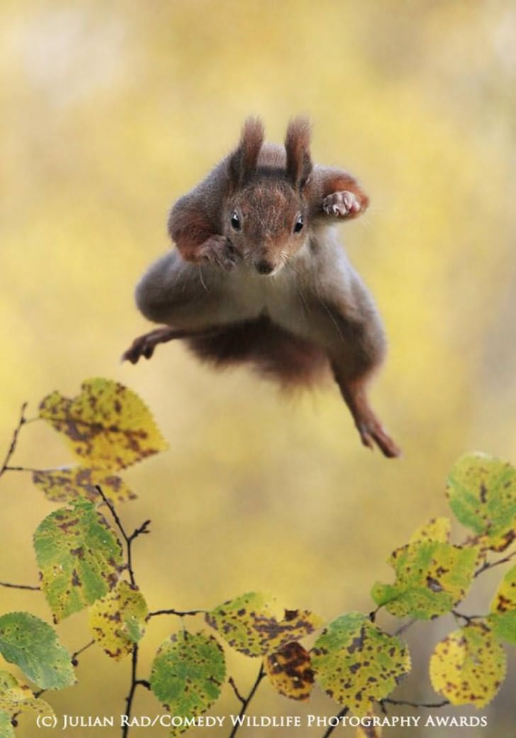 Comedy Wildlife – Contest For The Funniest Animal Photography Animals + Nature Funny
