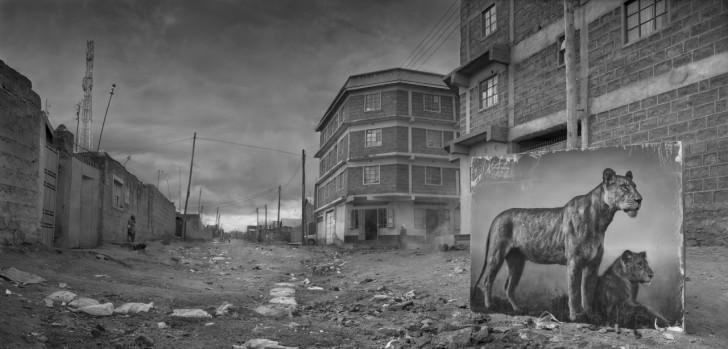Nick Brandt Animals Lost in Their Environment Photography