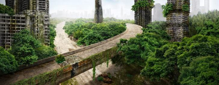 Impressive Video: What Would Happen If Humans Disappeared? Animals + Nature