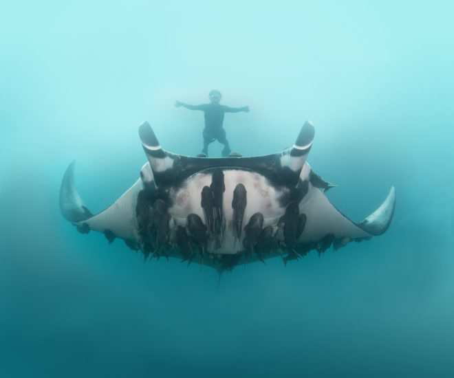 Meet the Scientist Snapping Selfies With Giant Manta Rays Photography