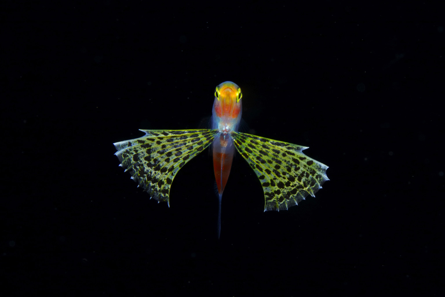 Amazing Pictures of Plankton – Fubiz Media Design