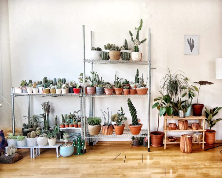 Closer to Nature: Your Natural Product Guide Lifestyle Sustainability