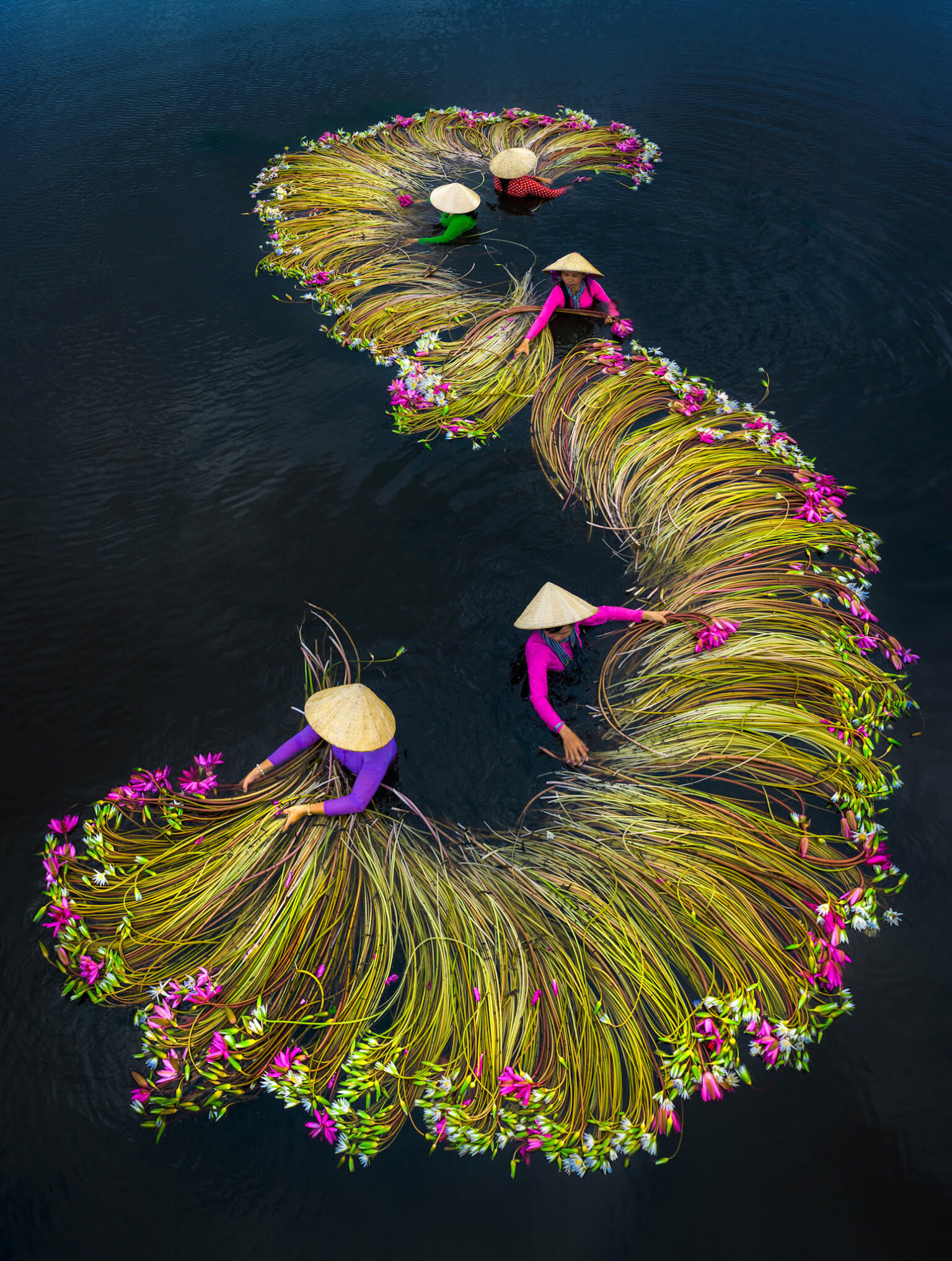 Pictures of the Water Lily Harvest by Trung Huy Pham – Fubiz Media Design